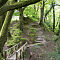 Walk Throgh The Trees