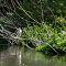 Giant-Egret.jpg