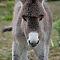 Baby-donkey.jpg